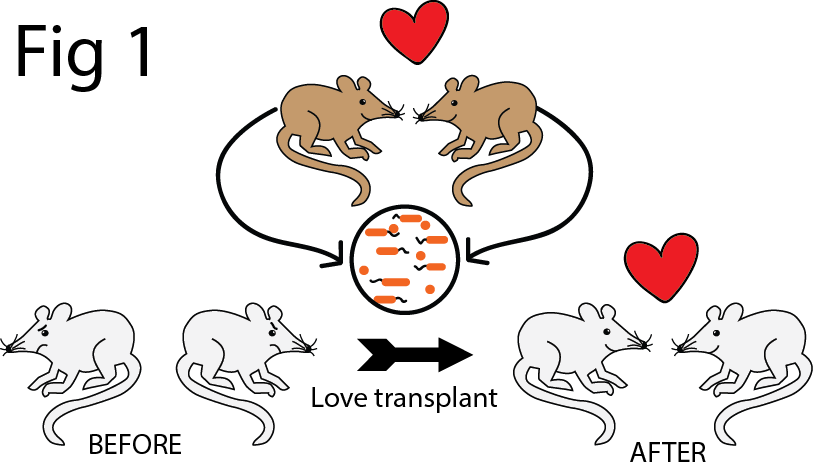lovetransplant-transparent